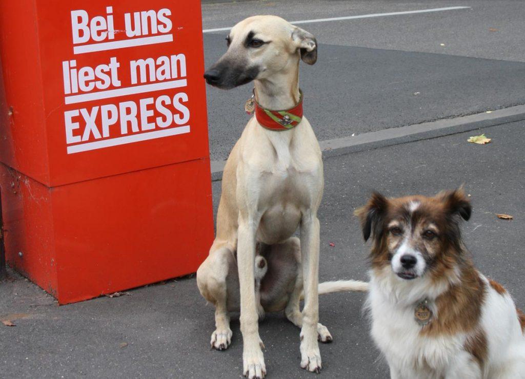 Blogartikel Hund