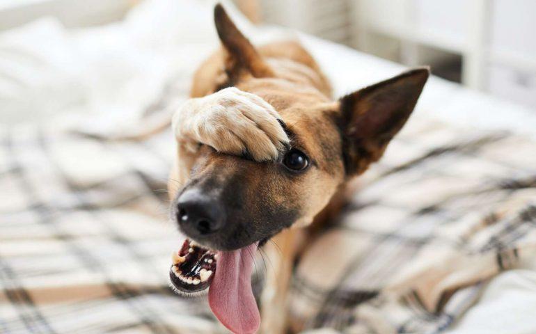 embarassed-dog-on-bed.jpg